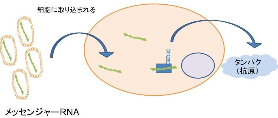 新型コロナウイルスワクチンスライド確認2-5.jpg
