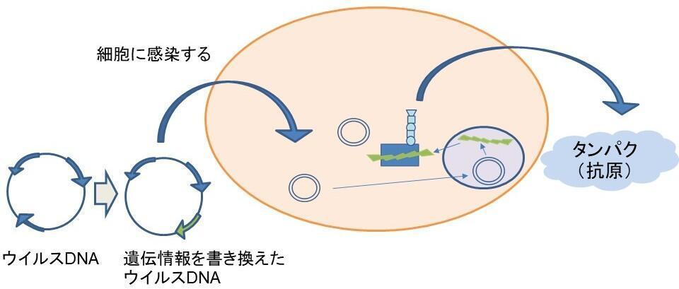 新型コロナウイルスワクチンスライド確認2-6.jpg
